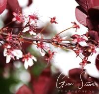 red summer 2