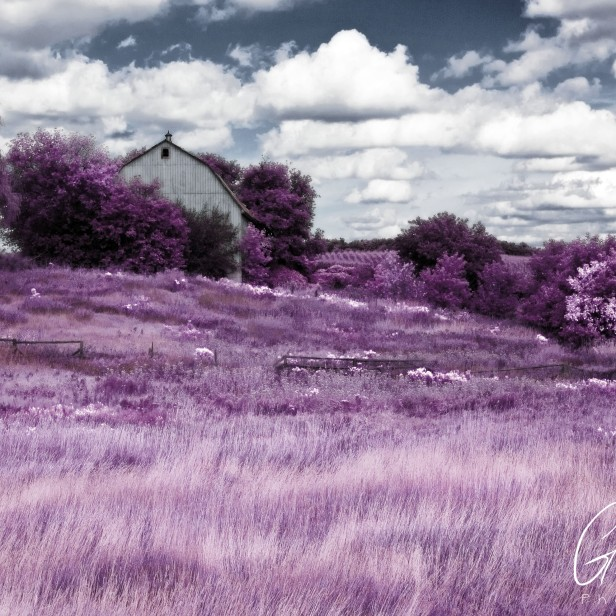 Pink Farm House