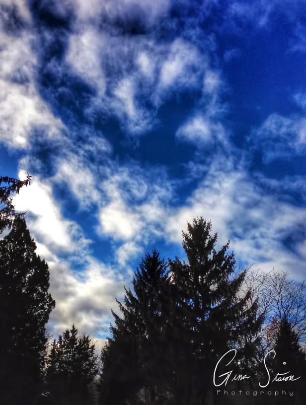 Blue Sky and Dark Trees