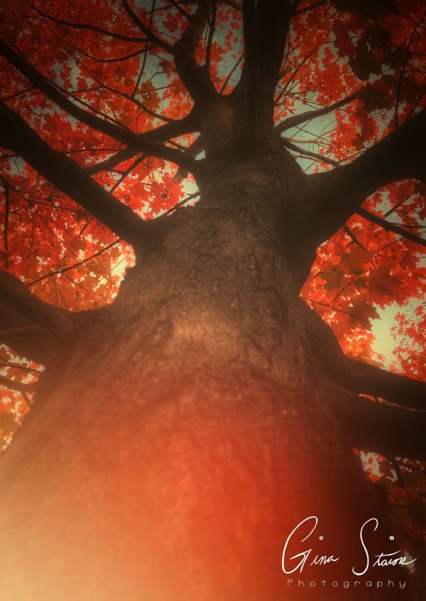Soft, Autumn Light