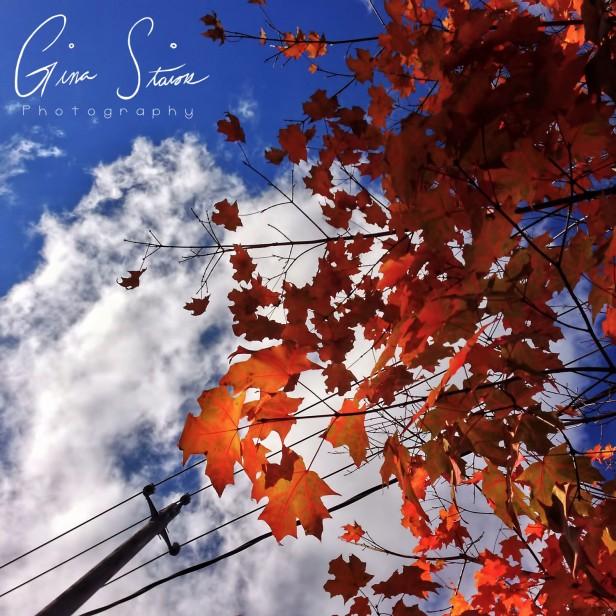 Overhead in Autumn