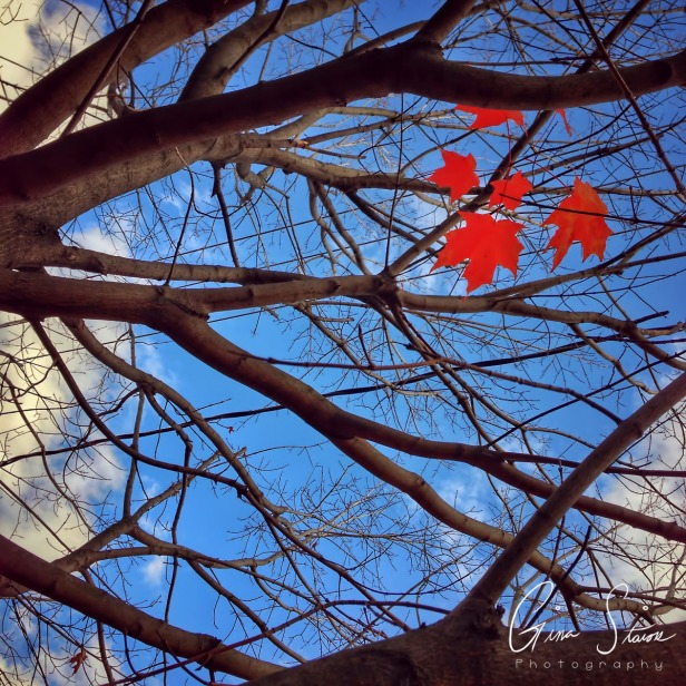 Overhead in Autumn II
