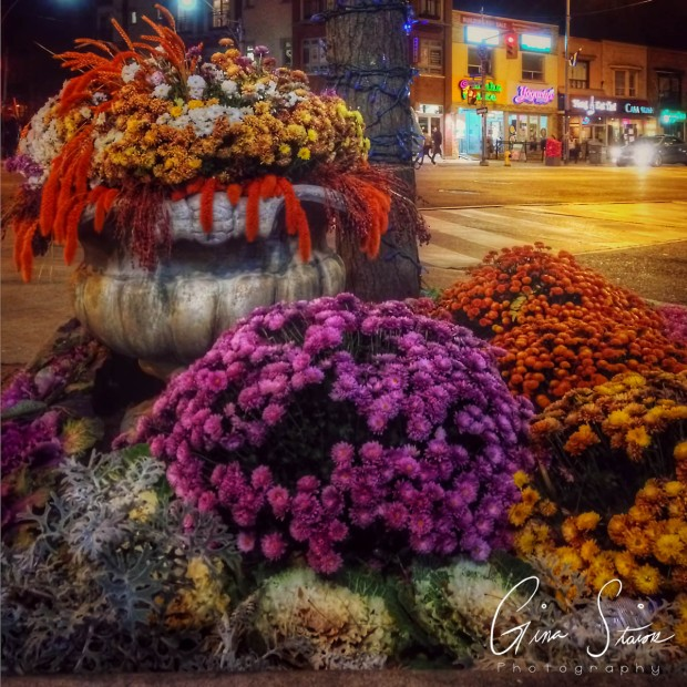 Flowers at Night