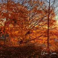 Leaves in Autumn III