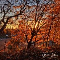 Leaves in Autumn II