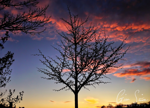 Tree and a May Sunset