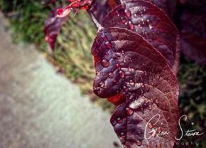 Raindrops on Leaves after Rain I