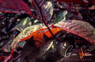 Raindrops on Leaves after Rain II