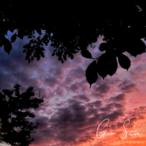 Leaves and Sunsets