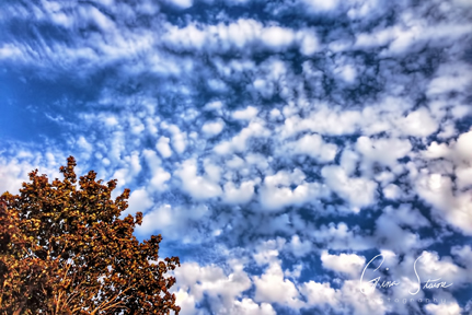 Blue Sky and Clouds on August 23, 2016.
