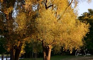 Approaching Autumn II