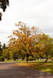 Autumn on October 2, 2016. II