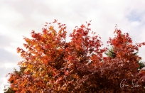 Autumn on October 2, 2016. V