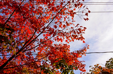 Autumn Leaves on October 8, 2016.