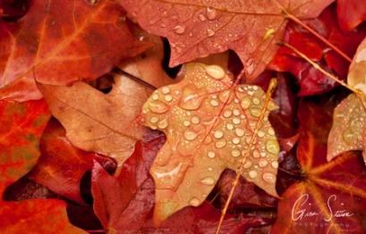 Droplets on Leaves I