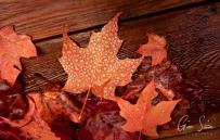 Droplets on Leaves II