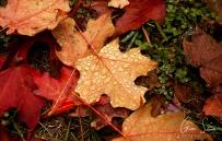 Droplets on Leaves III