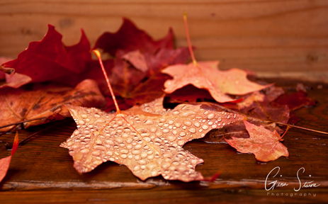 Droplets on Leaves IV