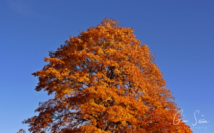 Trees and Leaves in Autumn I