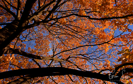 Trees and Leaves in Autumn III