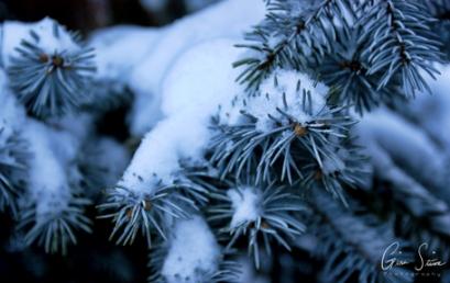 Close Up Snow I