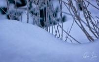 Close Up Snow III