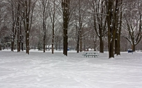 Snow in Withrow Park I