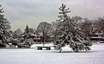 Snow in Withrow Park II