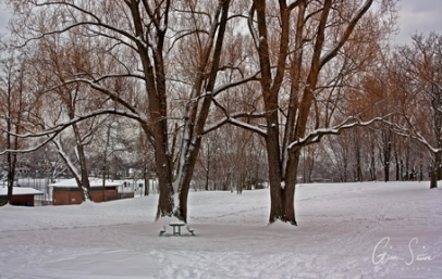 Snow in Withrow Park III