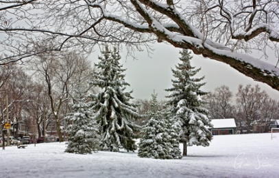 Snow in Withrow Park IV
