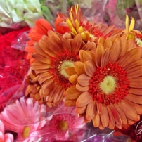 Grocery Store Flowers I