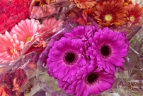 Grocery Store Flowers III