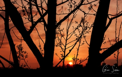Sunset on April 11, 2017 Through the Trees I