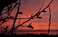 Sunset on April 11, 2017 Through the Trees V