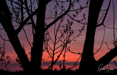 Sunset on April 11, 2017 Through the Trees VI