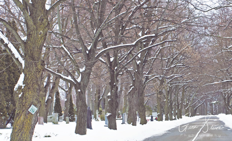 Winter Trees on March 3rd, 2019.